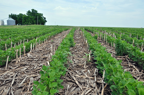 the importance of crop residue in agricultural conservation Conservation agriculture is widely viewed as an important strategy for maintaining healthy soils and improving long-term agricultural productivity, but also has the potential to help in.